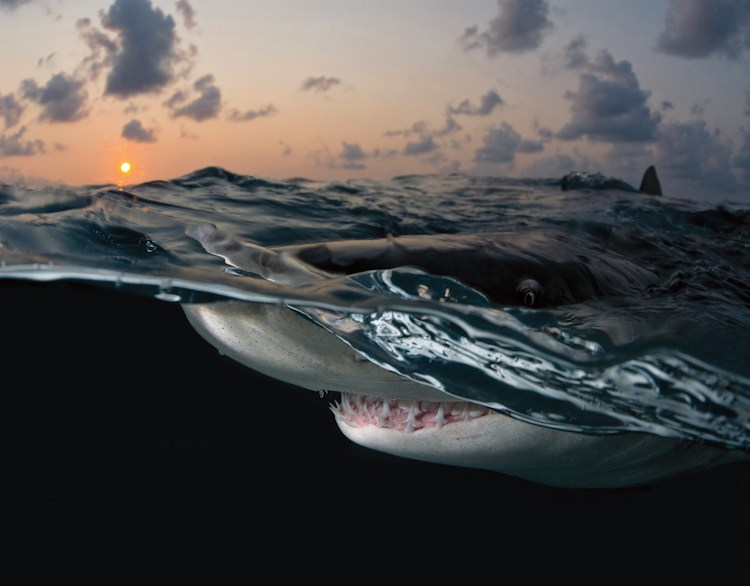 Deano Cook Lemon Shark Sunset