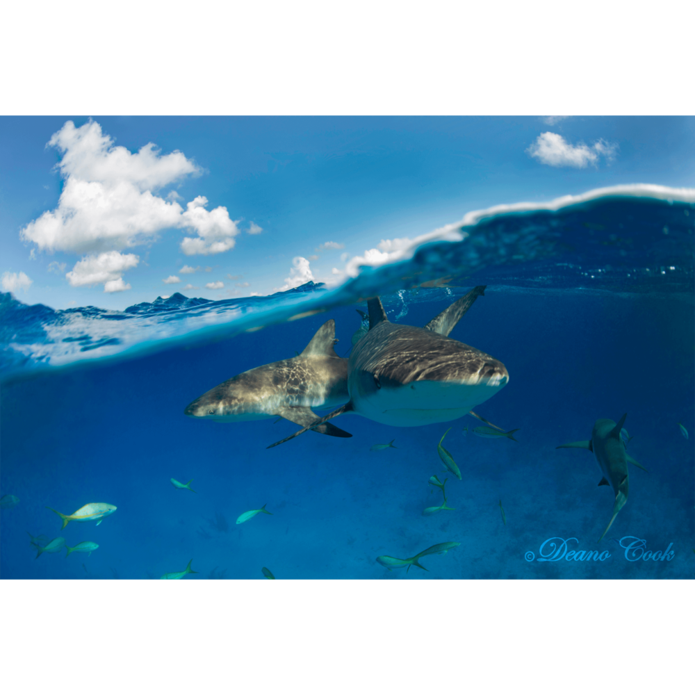 Reef Shark Wave Cove Canvas Print