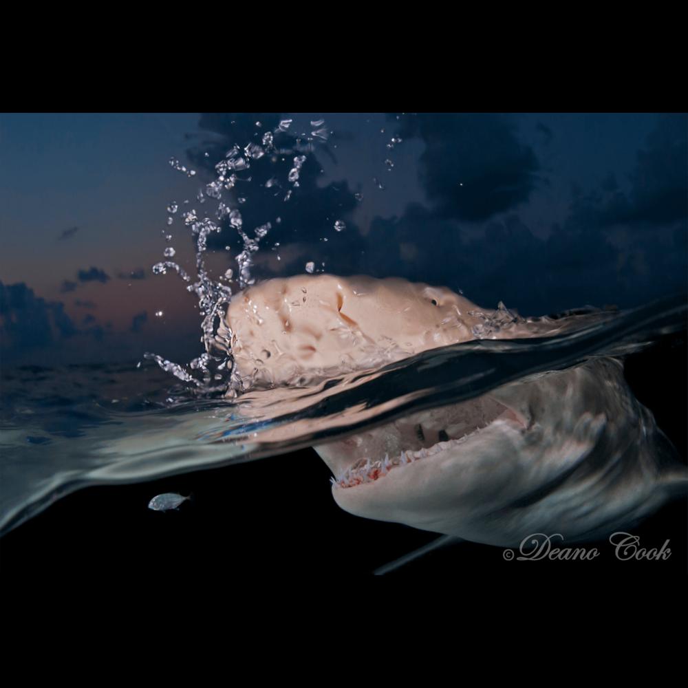 Swim Fast Canvas Print